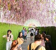 Khám phá Lễ hội xem qua Hoa ngay trung tâm Sài Gòn