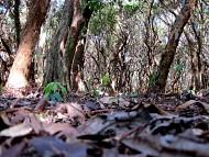 Rừng Trâm đảo Minh Châu – Vân Đồn