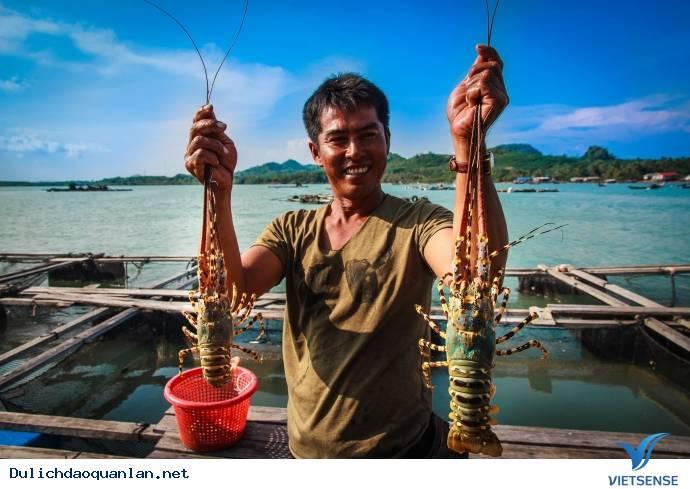 5 hòn đảo ở Việt Nam là nơi lý tưởng để thưởng thức ngon 'tôm hùm-giá rẻ',5 hon dao o viet nam la noi ly tuong de thuong thuc ngon tom humgia re