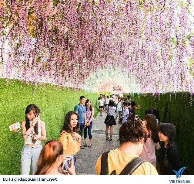 Khám phá Lễ hội xem qua Hoa ngay trung tâm Sài Gòn,kham pha le hoi xem qua hoa ngay trung tam sai gon