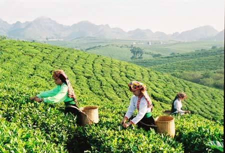 Vùng Đông Bắc Việt Nam,vung dong bac viet nam